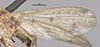 http://mczbase.mcz.harvard.edu/specimen_images/entomology/large/MCZ-ENT00007836_Sepedon_tenuicornis_fwg.jpg