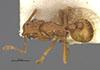 http://mczbase.mcz.harvard.edu/specimen_images/entomology/large/MCZ-ENT00009040_Blepharidatta_brasilensis_had.jpg