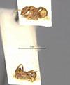 http://mczbase.mcz.harvard.edu/specimen_images/entomology/large/MCZ-ENT00009040_Blepharidatta_brasilensis_hala.jpg