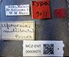 http://mczbase.mcz.harvard.edu/specimen_images/entomology/large/MCZ-ENT00009071_Apenesia_malaitensis_lbs.jpg
