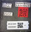 http://mczbase.mcz.harvard.edu/specimen_images/entomology/large/MCZ-ENT00009087_Azteca_muelleri_terminalis_lbs.jpg