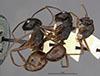 http://mczbase.mcz.harvard.edu/specimen_images/entomology/large/MCZ-ENT00009233_Camponotus_maguassa_hala.jpg
