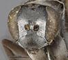 http://mczbase.mcz.harvard.edu/specimen_images/entomology/large/MCZ-ENT00010017_Anoplius_bolli_hef.jpg