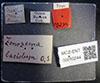 http://mczbase.mcz.harvard.edu/specimen_images/entomology/large/MCZ-ENT00010244_Trypeta_basiolum_lbs.jpg