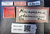 http://mczbase.mcz.harvard.edu/specimen_images/entomology/large/MCZ-ENT00010892_Macronema_obscurum_lbs.jpg