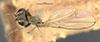 http://mczbase.mcz.harvard.edu/specimen_images/entomology/large/MCZ-ENT00011128_Notiphila_unicolor_had.jpg