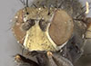 http://mczbase.mcz.harvard.edu/specimen_images/entomology/large/MCZ-ENT00011131_Notiphila_macrochaeta_hef.jpg
