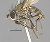 http://mczbase.mcz.harvard.edu/specimen_images/entomology/large/MCZ-ENT00011133_Notiphila_carinata_hal.jpg