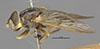 http://mczbase.mcz.harvard.edu/specimen_images/entomology/large/MCZ-ENT00013116_Chrysochlamys_buccata_hal.jpg