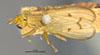 http://mczbase.mcz.harvard.edu/specimen_images/entomology/large/MCZ-ENT00013220_Tetanocera_plebeja_had.jpg