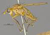 http://mczbase.mcz.harvard.edu/specimen_images/entomology/large/MCZ-ENT00013220_Tetanocera_plebeja_hal.jpg