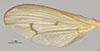 http://mczbase.mcz.harvard.edu/specimen_images/entomology/large/MCZ-ENT00013221_Tetanocera_plumosa_fwg.jpg