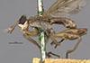 http://mczbase.mcz.harvard.edu/specimen_images/entomology/large/MCZ-ENT00013227_Sepedon_armipes_hal.jpg