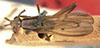 http://mczbase.mcz.harvard.edu/specimen_images/entomology/large/MCZ-ENT00013228_Sepedon_fuscipennis_had.jpg
