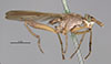 http://mczbase.mcz.harvard.edu/specimen_images/entomology/large/MCZ-ENT00013228_Sepedon_fuscipennis_hal.jpg