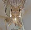 http://mczbase.mcz.harvard.edu/specimen_images/entomology/large/MCZ-ENT00013228_Sepedon_fuscipennis_hef.jpg