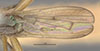http://mczbase.mcz.harvard.edu/specimen_images/entomology/large/MCZ-ENT00013229_Sepedon_pusillus_fwg.jpg