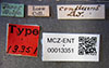 http://mczbase.mcz.harvard.edu/specimen_images/entomology/large/MCZ-ENT00013351_Chlorops_confluens_lbs.jpg
