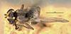 http://mczbase.mcz.harvard.edu/specimen_images/entomology/large/MCZ-ENT00013355_Chlorops_versicolor_had.jpg