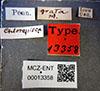 http://mczbase.mcz.harvard.edu/specimen_images/entomology/large/MCZ-ENT00013358_Chlorops_grata_lbs.jpg