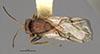 http://mczbase.mcz.harvard.edu/specimen_images/entomology/large/MCZ-ENT00013837_Andricus_marmoreus_had.jpg