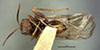 http://mczbase.mcz.harvard.edu/specimen_images/entomology/large/MCZ-ENT00013837_Andricus_marmoreus_hav.jpg