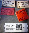 http://mczbase.mcz.harvard.edu/specimen_images/entomology/large/MCZ-ENT00013837_Andricus_marmoreus_lbs.jpg