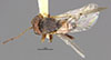 http://mczbase.mcz.harvard.edu/specimen_images/entomology/large/MCZ-ENT00013898_Andricus_montezumus_had.jpg