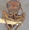http://mczbase.mcz.harvard.edu/specimen_images/entomology/large/MCZ-ENT00013898_Andricus_montezumus_hef.jpg