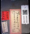 http://mczbase.mcz.harvard.edu/specimen_images/entomology/large/MCZ-ENT00015344_Priocnemis_Pompilidae_barbouri_lbs.jpg