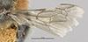 http://mczbase.mcz.harvard.edu/specimen_images/entomology/large/MCZ-ENT00017213_Colletes_campoi_fwg.jpg