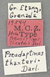 http://mczbase.mcz.harvard.edu/specimen_images/entomology/large/MCZ-ENT00019544_Pseudaptinus_thaxteri_lbs.jpg