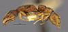 http://mczbase.mcz.harvard.edu/specimen_images/entomology/large/MCZ-ENT00020365_Stigmatomma_pallidipes_var_wheeleri_hal.jpg