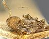 http://mczbase.mcz.harvard.edu/specimen_images/entomology/large/MCZ-ENT00020384_Prionopelta_marthae_had.jpg