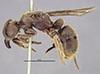 http://mczbase.mcz.harvard.edu/specimen_images/entomology/large/MCZ-ENT00020440_Pachycondyla_sandahana_hala.jpg