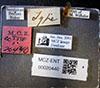 http://mczbase.mcz.harvard.edu/specimen_images/entomology/large/MCZ-ENT00020440_Pachycondyla_sandahana_lbsa.jpg