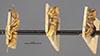 http://mczbase.mcz.harvard.edu/specimen_images/entomology/large/MCZ-ENT00020457_Euponera_stigma_var_rufescens_halc.jpg