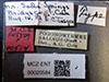 http://mczbase.mcz.harvard.edu/specimen_images/entomology/large/MCZ-ENT00020584_Pogonomyrmex_salinus_lbs.jpg