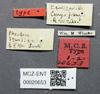 Media of type image, MCZ:Ent:20653 Identified as Pheidole squalida type status Syntype of Pheidole squalida. . Aspect: labels