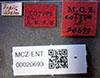 http://mczbase.mcz.harvard.edu/specimen_images/entomology/large/MCZ-ENT00020693_Pheidole_voslitti_lbs.jpg