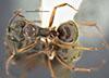 http://mczbase.mcz.harvard.edu/specimen_images/entomology/large/MCZ-ENT00021172_Monacis_valida_had.jpg