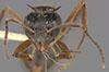 http://mczbase.mcz.harvard.edu/specimen_images/entomology/large/MCZ-ENT00021172_Monacis_valida_hef.jpg