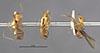 http://mczbase.mcz.harvard.edu/specimen_images/entomology/large/MCZ-ENT00021304_Azteca_aurita_pilosula_hala.jpg