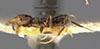 http://mczbase.mcz.harvard.edu/specimen_images/entomology/large/MCZ-ENT00021336_Azteca_olitrix_hal.jpg