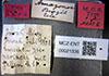 http://mczbase.mcz.harvard.edu/specimen_images/entomology/large/MCZ-ENT00021336_Azteca_olitrix_lbs.jpg