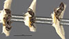 http://mczbase.mcz.harvard.edu/specimen_images/entomology/large/MCZ-ENT00021339_Azteca_pittieri_hala.jpg
