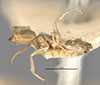 http://mczbase.mcz.harvard.edu/specimen_images/entomology/large/MCZ-ENT00021345_Azteca_tonduzi_hal.jpg