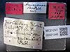 http://mczbase.mcz.harvard.edu/specimen_images/entomology/large/MCZ-ENT00021348_Azteca_traili_var_tococae_lbs.jpg