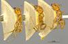 http://mczbase.mcz.harvard.edu/specimen_images/entomology/large/MCZ-ENT00021350_Azteca_trigona_mathildae_hala.jpg