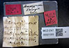 http://mczbase.mcz.harvard.edu/specimen_images/entomology/large/MCZ-ENT00021355_Azteca_ulei_var_cordiae_lbs.jpg